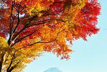 Japan, My Love...