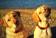 """Petsies from Godfrey's Dogdom! / Adorable & heart-melting """"selfies"""" of your pets!"""
