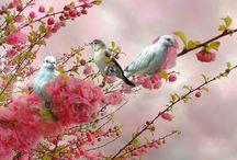 Côté Oiseau.....Birds