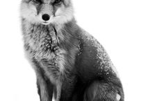 Foxes / Images of foxes real or make believe