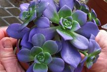 Succulent Gardens / Surprisingly pretty and wonderfully low-maintenance, succulent gardens offer endless varieties to choose from for your garden.