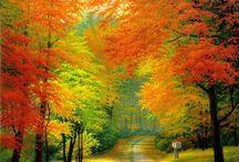 Autumn / by Tom Dillion