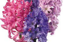kwiaty rady