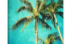 Palm paintings