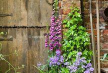 Jardins de cottage anglais