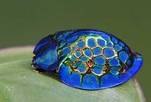 chrysomelidae cassidinae