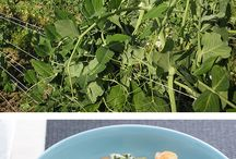 Blue Apron recipes we love! / by SouthernSecrets CarolinaStyle