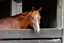 MY Horse - EMMA