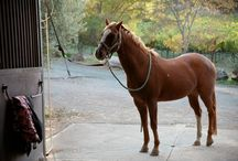Napa Valley Horse Company / A riding facility that sprang out of the Napa Valley Horse rescue. They do horse for children and horseback riding lessons and trail rides. They also sell and board horses.