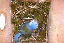 Vogel maakt nestje