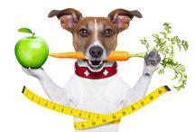 Dog Blogs / Wapiti Lab Dog Blogs