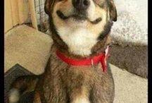 Cani & Co.