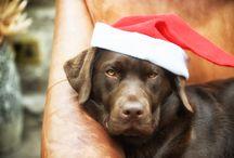 Labradorable Christmas