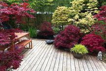 ManD garden