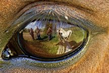 Eye animal