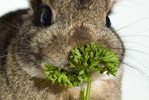 Bunnies <3 / by Lorna Steele