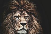 Lion Love♥