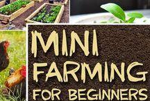 Mini Farming/Homesteading