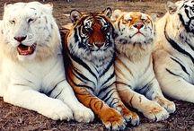 Eläimiä