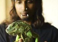 Reptile Enclosure Ideas