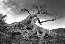 @old dead trees / by sEeDs Of DaRkNeSs