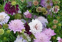 Garden ideas / Seeds and planting ideas for 2015