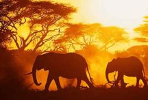 Places to Go: Africa