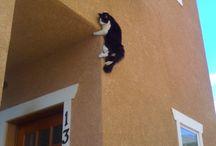 Cats / by Lori Sloan