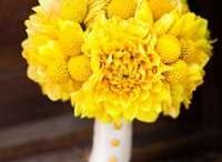 Yellow & Grey: 8.17.2013 / by Lauren Miller