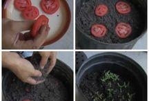 Dyrkningsmetoder af planter