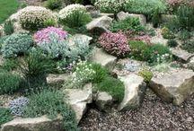 Gardening - rock gardens