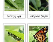 Zoology - Insects