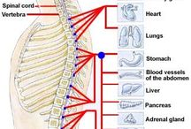 Central Nervous System / by Penny Rothenbusch-Souders