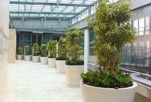Indoor Plants - Health Benefits