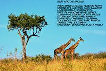 Best African Safaris / Masai Mara National Reserve, Kenya Serengiti National Park, Tanzania Leopard Hills, South Africa Karisia Walking Safari, Kenya Pumba Game Reserve, South Africa Etosha National Park, Nambia Chobe National Park, Botswana Volcanoes National Park, Rwanda Zambezi Valley, Zambia Kruger National Park, South Africa