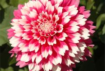 Flowers Feb