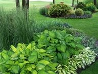 Landscaping / by Lou Wiens