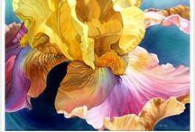 flores magistrales