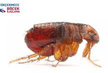 Küçükçekmece Böcek İlaçlama / Küçükçekmece böcek ilaçlaması