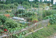 Ara Te Kereru Garden Project