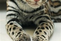Animals!! / My love love love!