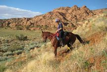 Training and fitness for horses