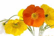 Fototapeten Blumen und Landschaften / Blumenbilder und Landschaften auf Fototapete im Wunschformat und in unterschiedlichen Tapetenqualitäten.