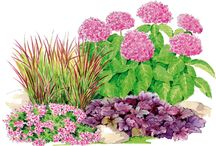 jardins/fleurs