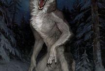 Wolfes
