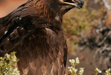 Cool - Birds of Prey