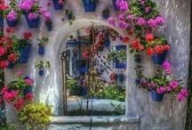Ονειρεμένο σπίτι