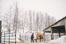 Our Farm / Cosman & Webb Farms in the eastern Townships of southern Quebec, Canada.
