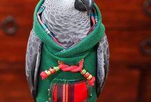 parrotoos