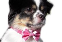 Amys Collars and More / Dog and Cat Collars / by Amy's Collars And More
